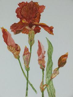 My Botanical Iris