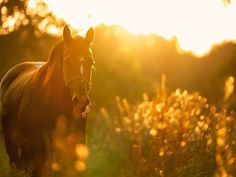 We're wishing you some quiet, peaceful time in the presence of horses this weekend. Free Pictures, Free Images, Cool Pictures, Deep Relaxation, Clydesdale, Appaloosa, Relaxing Music, Show Jumping, Horse Care