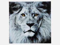 Obraz Face Lion — Obrazy — KARE® Design #KARE #DESIGN #modern #furniture #ILOVEKARE #KARE24 #picture #lion #grey