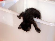 itty bitty black kitty