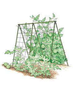 A-frame- melon-cucumber-squash- support - Alles über den Garten Best Greenhouse, Backyard Greenhouse, Greenhouse Ideas, Homemade Greenhouse, Pea Trellis, Garden Trellis, Wire Trellis, Cucumber Trellis, Urban Farming