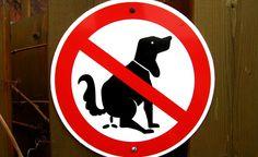 Vilarejo na Espanha entrega cocôs de cachorros em domicílio a seus donos