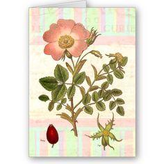 Tattoo idea. Greeting Cards:  Dog Rose   19th Century English Botanical Engraving