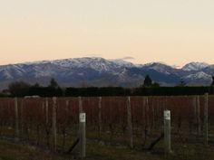 Wine Tours Blenheim, Picton & Marlborough New Zealand