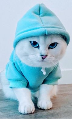 Visual Merchandiser, styling and still life designs Baby Animals Super Cute, Cute Baby Cats, Cute Little Animals, Cute Cats And Kittens, Cute Funny Animals, Kittens Cutest, Funny Cats, Ragdoll Kittens, Tabby Cats