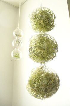 Air plants in hanging containers are not a hot news new. We shall show you 20 air plant containers and terrarium ideas which offer great possibilities Garden Plants, Indoor Plants, House Plants, Patio Plants, Container Plants, Container Gardening, Plante Crassula, Ikebana, Air Plant Display