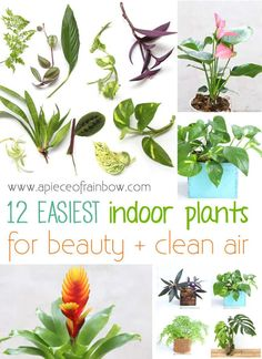 Easy Indoor Plants for beauty and clean air! | A Piece Of Rainbow Blog Same