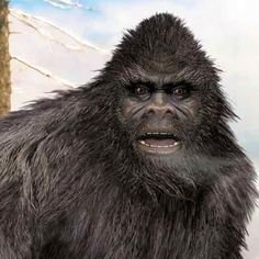Is #Bigfoot fact or lore? These cryptozoologist investigators explore the…
