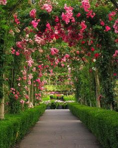 that's why today we comes with beautiful rose garden gallery, check it
