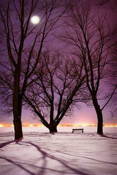 One last shot from the Bellevue Park, winter 2005 series. More moon/trees/snow/shadows. Bright Night at Bellevue Park Beautiful Moon, Beautiful World, Beautiful Places, Bellevue Park, Memes Arte, Winter Beauty, Pics Art, Winter Scenes, Ciel