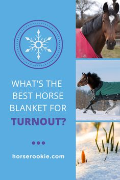 When the winter comes, you know your horse doesn't want to stay inside. Here are the BEST horse blankets for turnout while the temps are dropping and the rain and snow are here in full force. #horsecare #horseownershiptips #equestriantips #horserookie