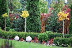 Igiełkowy ogródeczek - strona 508 - Forum ogrodnicze - Ogrodowisko Begonia, Garden, Plants, Mediterranean Garden, Garten, Lawn And Garden, Gardens, Plant, Gardening