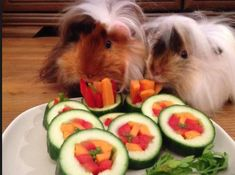 You can make great snacks for guinea pigs with vegetables you have at home