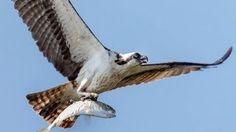 5 Minute Photo - Birds in Flight Camera Settings | Music Jinni