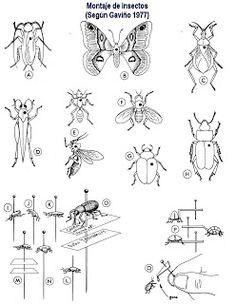 Biología con Sam : Manual para colectar y montar insectos Math, Tattoos, Diy, Insects, Science, Libros, Products, Tatuajes, Bricolage