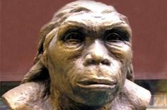 Lantian Man is the name given to subspecies of Homo erectus of which ancient fossils were found in Lantian County, Shaanxi Province in China in 1963. Lantian Man were originally dated to 1.15 mi
