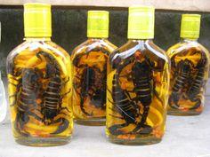 Skorpion wine