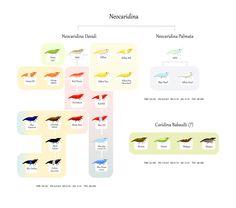 Taiwan bee color genetic chart - GTA Aquaria Forum - Aquarium Fish ...