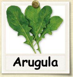 How to Grow Arugula | Guide to Growing Arugula