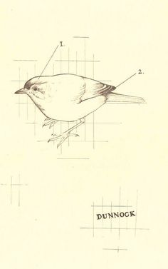 dunnock by Peter Carrington, via Flickr