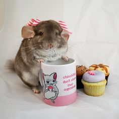 """Cosette Agnes  (@cosettethechinchilla) on Instagram: """"Chinchillas don't share their cupcakes #georgetowncupcakes #cupcakes #mug #chinchilla…"""""""
