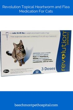 Revolution is a topical heartworm and flea medication for your cat. There is no available treatment for cats if they do test positive for heartworm disease.