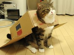 Maru Airlines is Ready to Serve You! - LOLcats is the best place to find and submit funny cat memes and other silly cat materials to share with the world. We find the funny cats that make you LOL so that you don't have to. I Love Cats, Crazy Cats, Cute Cats, Funny Kitties, Silly Cats, Funny Animal Pictures, Funny Animals, Cute Animals, Pet Pictures