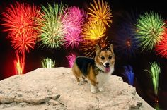 How to Keep Your Dog Happy When Fireworks Go Off—Using Science!