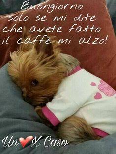 Buongiorno solo se mi dite che avete fatto il caffé mi alzo! #buongiorno