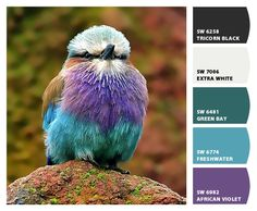 Lilac-breasted Roller paint colors by Sherwin-Williams