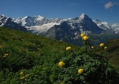 Another Hike - above Grindelwald to Bachalpsee and beyond.