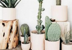 Green & Wild's Guide to Common Houseplants and How To Care For Them – Cactus Plantas Indoor, Cactus Plante, Deco Nature, Decoration Plante, Green Decoration, Plants Are Friends, Walled Garden, Cactus Y Suculentas, Cactus Flower