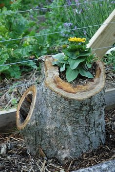 P. found a hollow piece of tree limb the other day.  I didn't want to bring it inside because I wasn't sure WHY it was hollow...but this would be a great way to use it.