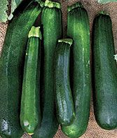 Zucchini Black Beauty Organic Squash Seeds and Plants, Vegetable Gardening at Burpee.com