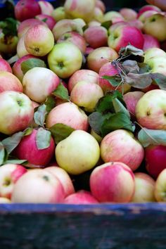 Love these apples!! Cannelle et Vanille: Where I have been...