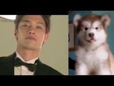 "Twins of Sung Hoon 성훈 - YouTube   Thanks ""Tum"" cute fun video ♥ More videos & photos pls go to link Sung Hoon International Fanpage:  https://www.facebook.com/SungHoonBang.FanPage"