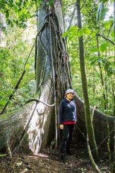 Inmensos árboles, vegetación tropical y la fauna más exótica se encuentran en la selva de #Chiapas. Senderos que valen la pena recorrerlos.