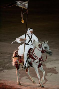 Meet the World's Oldest Breed - The Arabian Horse: An Arabian Horse.