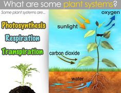 Classical Conversations Cycle 1: Week 12 Science-Plant Systems