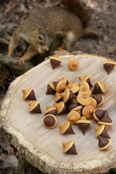Cute acorns - chocolate kisses, mini nilla waffers and peanutbutter chip on top - cute minus the creepy squirrel in the background.    Perfect woodland cake, baby shower and birthday decorations ideas, with wood and forest animal theme.  Cheap, DIY & 100%