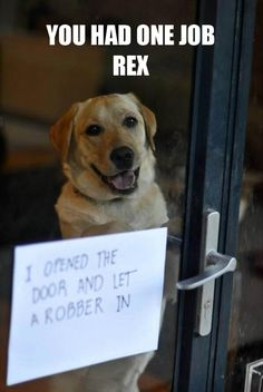 funny dog shaming you had one job Funny Animal Pictures, Dog Pictures, Funny Animals, Funny Photos, Animal Pics, Animals Dog, Funny Images, I Love Dogs, Cute Dogs