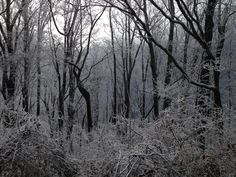 Winter's icy beauty in the Smoky Mountains National Park.
