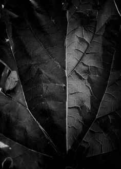 """Leaf Study"" photograph taken in Wisconsin. Prints available."