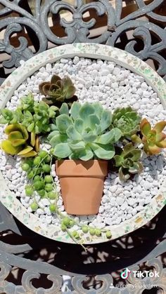Succulents In Containers, Cacti And Succulents, Planting Succulents, Small Cactus Plants, Container Flowers, Container Plants, Potted Plants, Container Gardening, Succulent Gardening