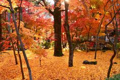 永観堂 ~京都の紅葉 Eikando Temple,Kyoto