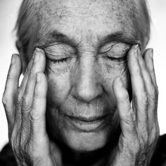 """""""People say to me so often, 'Jane how can you be so peaceful when everywhere around you people want books signed, people are asking these questions and yet you seem peaceful,' and I always answer that it is the peace of the forest that I carry inside."""" -Jane Goodall"""