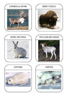 Imagier des animaux polaires page 5