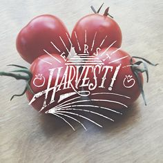 First harvest! __ Hand Lettering by [ts]Christer