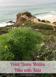 This easy Point Dume Malibu hike with kids offers views of the Santa Monica Bay, migrating gray whales in winter, wildflowers in spring and more. Hikes In Los Angeles, Los Angeles With Kids, Gray Whale, Hiking With Kids, Tide Pools, Stunning View, Whales, Outdoor Fun