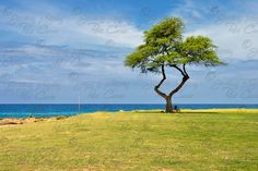 24x16 Tree Photography Nature Photography Summer от SensingMajesty